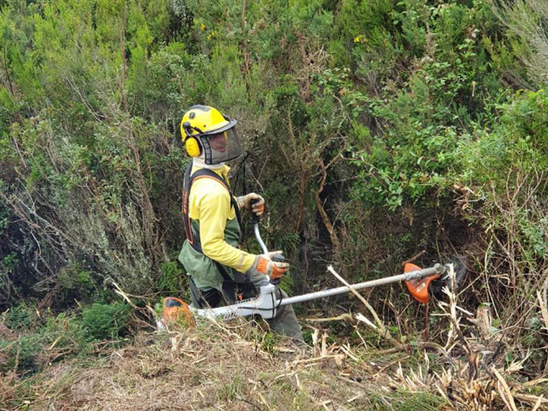 Sapadores Florestais mantêm ações essenciais de Defesa da Floresta Contra Incêndios