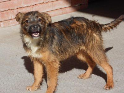 Cão 4