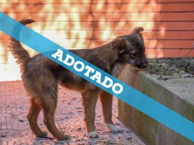 adotado.jpg