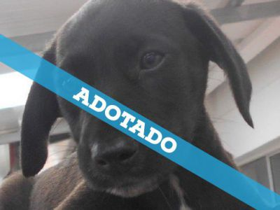 cao_3_adotado.jpg