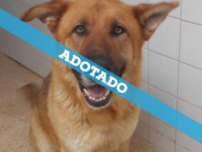 cao_adotado
