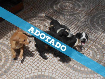 caes_adotado