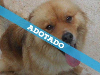 foto_4_adotado