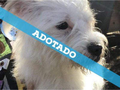 20-09-19_adotado