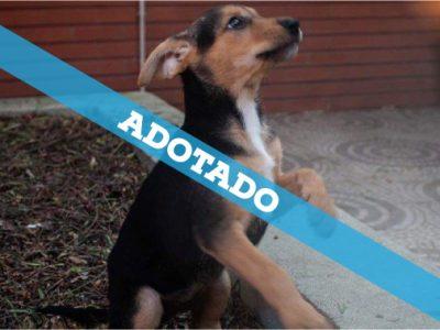 23-09-19_a_adotado