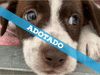 25-09-19_adotado