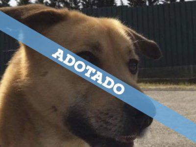 adotado_05_25