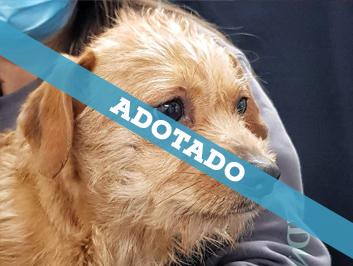 adotado_060820-1