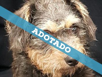adotado_060820-2