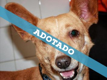 adotado_230620