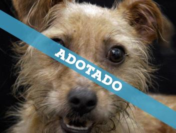 adotado_240720-2