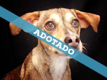 adotado_290720