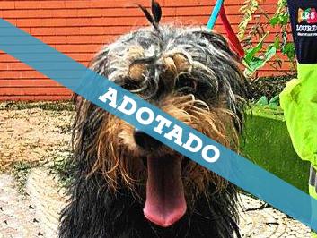 adotado_060820