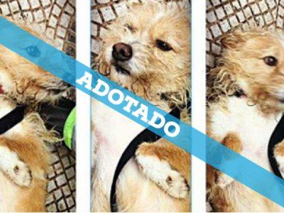 box_28-2_adoptado