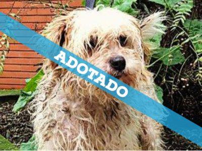 box_31_adotado
