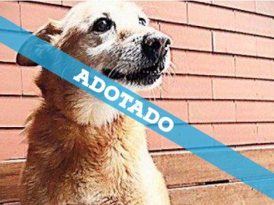box_34_adotado