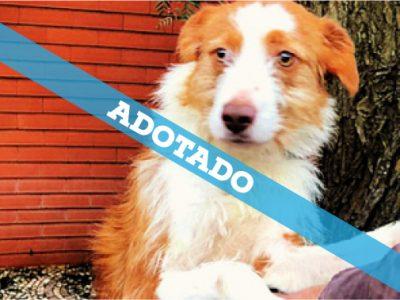 box_37_adotado
